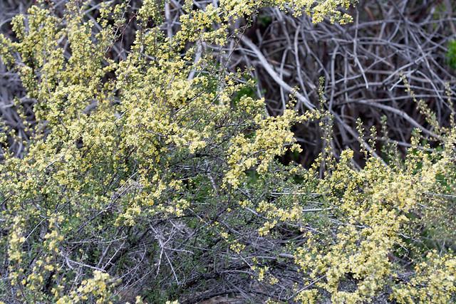 alder springs11 (1 of 1)