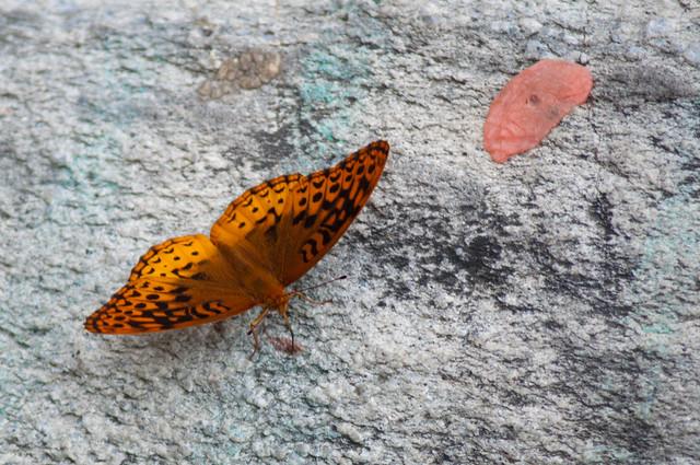 2011-06-11-DSC_0124