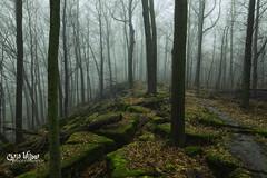 Winter is on Strike (wilbias) Tags: mist ontario trees canada fog forest winter trail green niagara jordan moss hiking hike mild bruce escarpment