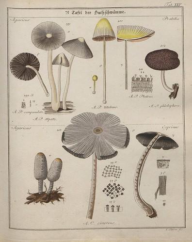 Das System der Pilze und Schwämme, 1817 i