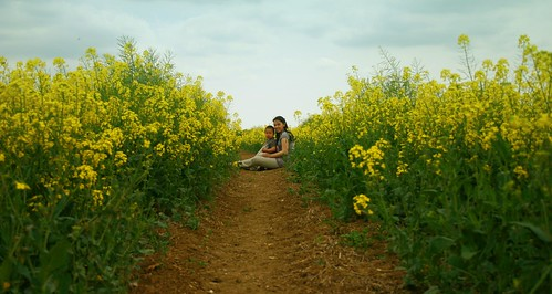 rapeseed21