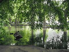 Duck Coverage (hincklej) Tags: provo brighamyounguniversity ut84602provoutah