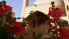 (Reza-ir) Tags: flower nature iran mason structure mashhad khorasan ايران گل ساختمان مشهد طبيعت بنا خراسانرضوي