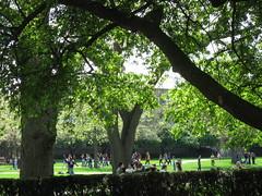 Students on the Quad, UIUC (dreamofdata) Tags: trees students campus spring quad universityofillinois uiuc quadrangle urbanachampaign
