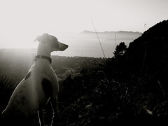 Sun Hunter (Dada Mar) Tags: sea dog sun white mountain black nature spain whippet mallorca thelittledoglaughed