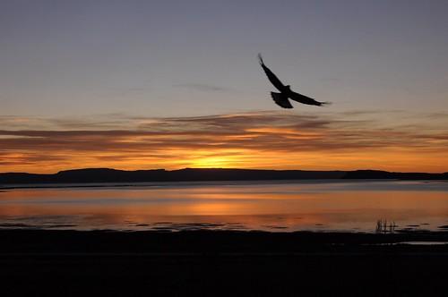 un águila al amanecer