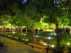 Shiraz - Iran - Near the Tomb of Saadi (Ab.Sarraf) Tags: park light tree bench iran shiraz shining saadi