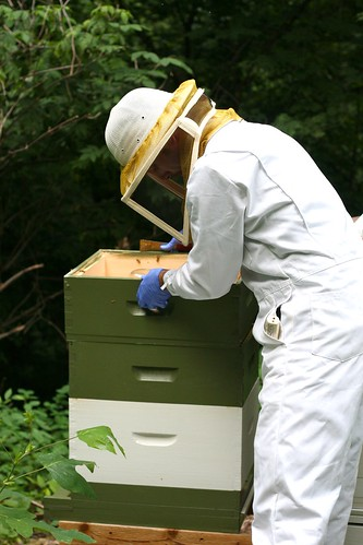Checking on the Hives