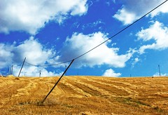 (Riccaro) Tags: sky yellow clouds wire nuvole blu wheat cable pisa giallo cielo links lanscape piles vedute campi santaluce collinepisane psccol4dsc8570 campimietuti