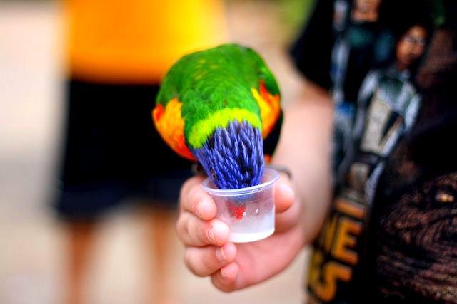 bird's nectar