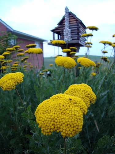 Yellow Flowers and Birdhouse