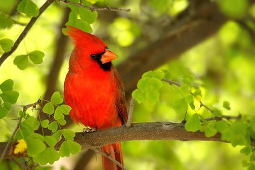 3810441125 8ea6014fc3 Beautiful Birds   The Splash of Colors!!!