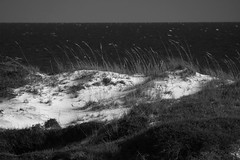 watersound dunes2 b&w