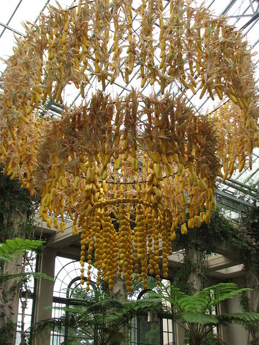Corn Chandelier - Longwood Gardens