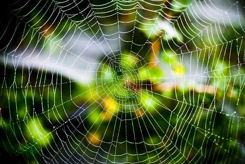 Įsipainioję voratinkliuose.