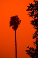 Sydney duststorm (Andy Burton Oz) Tags: orange color colour sydney australia explore drought nsw dust duststorm kuringgai roseville afsdxzoomnikkor1855mmf3556gedii