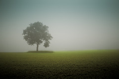 Loneliness Not Solitude (Loren Zemlicka) Tags: mist tree field grass fog rural landscape photography one photo oak midwest solitude image horizon country picture single lonely canonef1740mmf4lusm lonliness canoneos5d lorenzemlicka