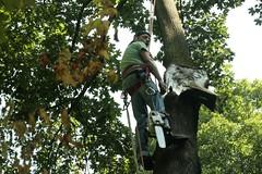 _MG_6371.JPG (zimbablade) Tags: trees sleepyhollow dougmiller videopoem