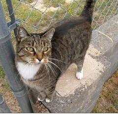Freeze frame from video (Hairlover) Tags: pet cats pets public cat kitten kitty kittens kitties hairlover allcatsnopeople
