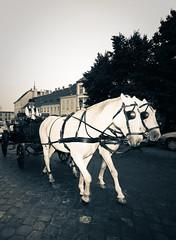 Budapest (Pedro Nez) Tags: horses copyright caballos travels hungary budapest pedro viajes pferde ungarn 2009 buda pest hungria nunez hungary2009