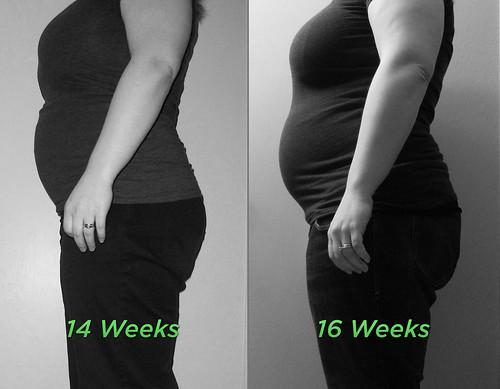 14-16 Week Comparison