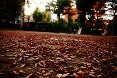 (X'mas) Tags: autumn fall japan canon kyoto kiss sigma 1770 x3 500d sakyo