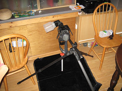 Set up for Tomato Photo