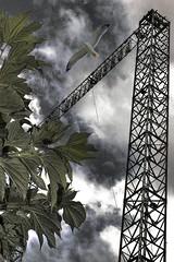 feuilles et structure (Valpolicello) Tags: verde green foglie grey gris grigio vert mouette goeland struttura