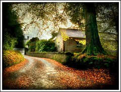 Lonely through the woods (dingerthetwinger) Tags: autumn ireland castle leaves path olympus lonely cookstown brandicarlile e410 drummanor