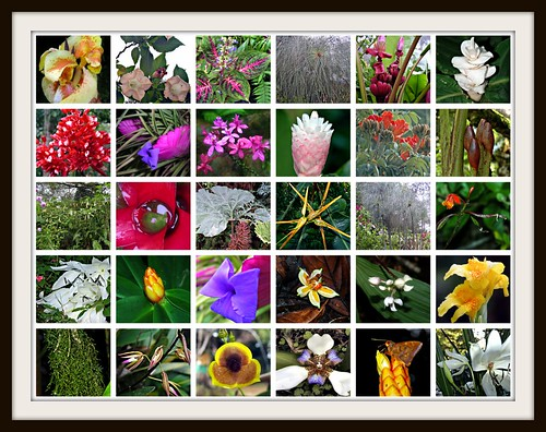 flora de Costa Rica