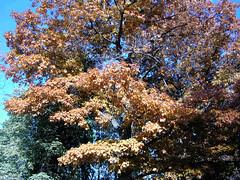 Fall Colors Boulder   DSCN0538