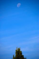 Lunar-cy!! (antonychammond) Tags: blue sky moon tree gmt potofgold flickraward estremità nikonflickraward trasognoerealta esenciadelanaturaleza
