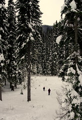 amongst the giants (D. Brandsma) Tags: manning manningpark cedars snow snowshoes perspective