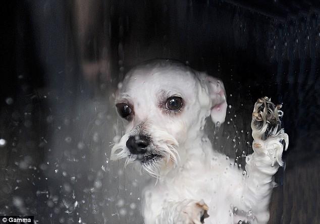 강아지 목욕기 01