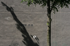 Temporary Constellation (sonofsteppe) Tags: life street city shadow summer urban detail building tree green art texture leaves lines wall architecture 50mm grey daylight mural hungary exterior geometry background budapest gray nobody surface dirty explore simplicity trunk visual simple exploration thewall fragment ilmuro bole scribbled wallscape sonofsteppe pusztafia zugl urbanlifeoftrees