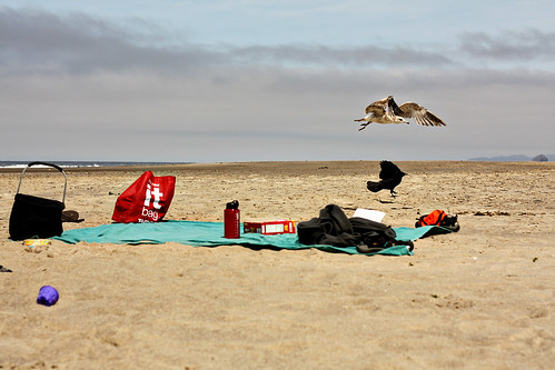 neskowin beach 116ed