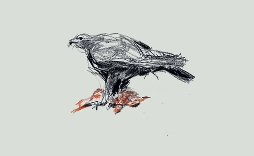 golden eagle drawing. Golden eagle with dead rabbit