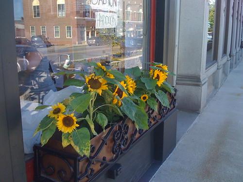 Wiscasset Windowbox