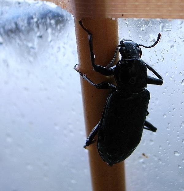 雨宿り中の甲虫