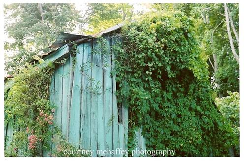 vine shed