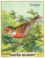 gilbert oiseau 4