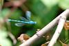 aUntitled-1dsc_0443 (webwandering) Tags: uk london nature flying inflight dragonfly bokeh deadleaves stick carole wansteadpark dhamaka edrich