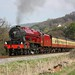 6100 Royal Scot