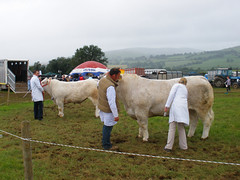 Tinahely Agricultural Show 2009