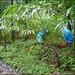 Cardamom harvesting