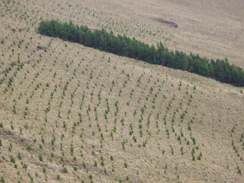 Plantaciones de Pino en Ecuador. Julio 2006. Foto: WRM