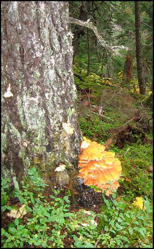 fungus1