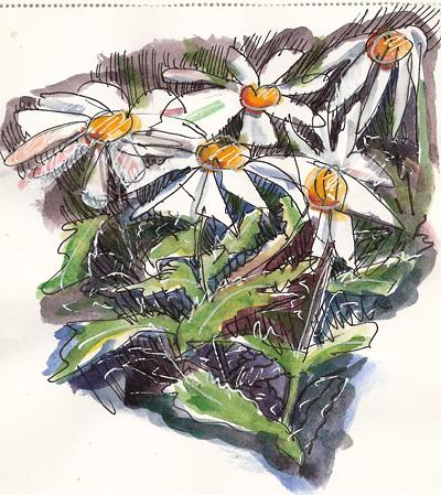 Marguerites Doodle