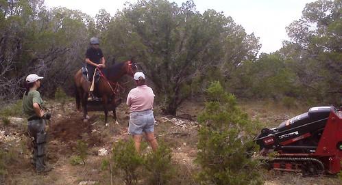 pfalls horse
