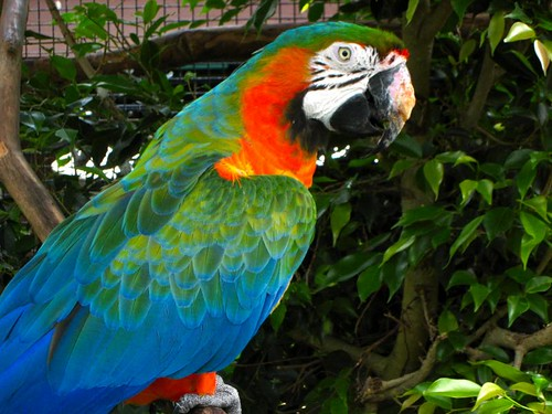 Max, the Catalina Macaw